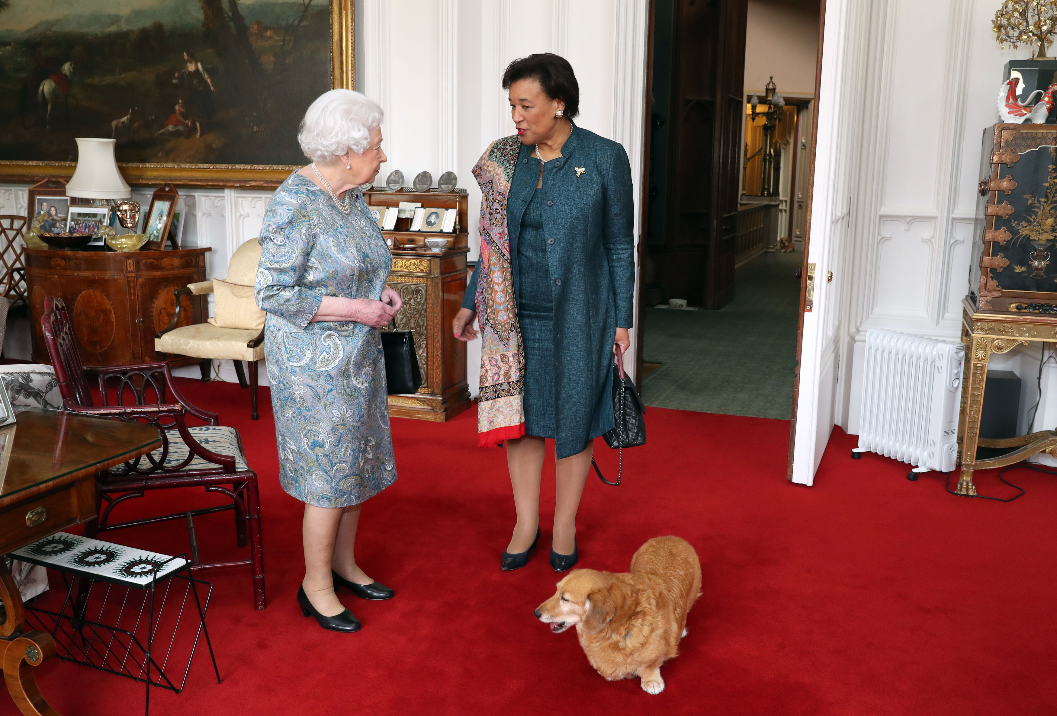Corgi Willow pictured with the Queen