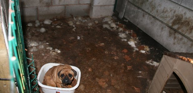 Puppy Trafficking Explosion Across North West Heart North West