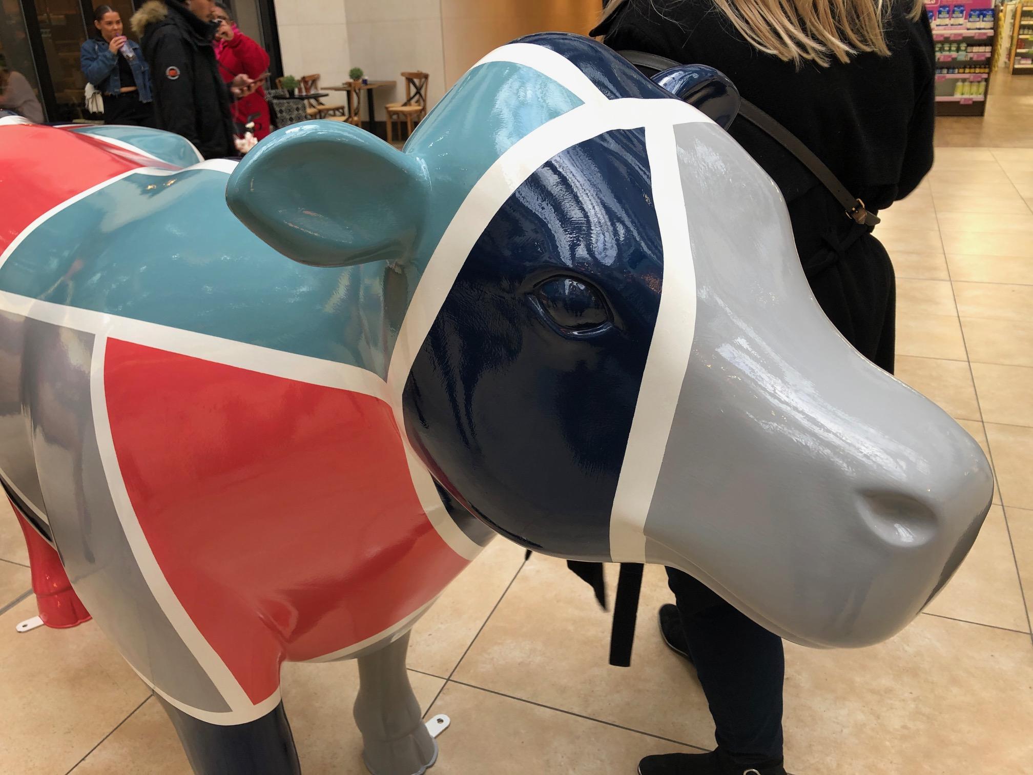 Cambridge Cows B